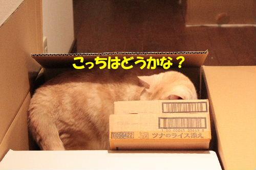 2011年7月箱6.JPG
