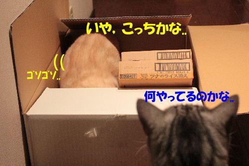 2011年7月箱7.JPG