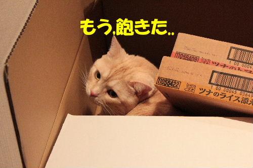 2011年7月箱8.JPG