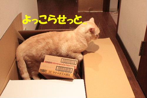 2011年7月箱9.JPG