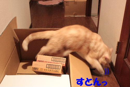 2011年7月箱9-2.JPG