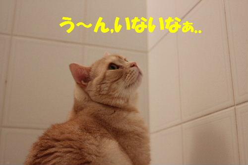 2011年7月風呂2.JPG