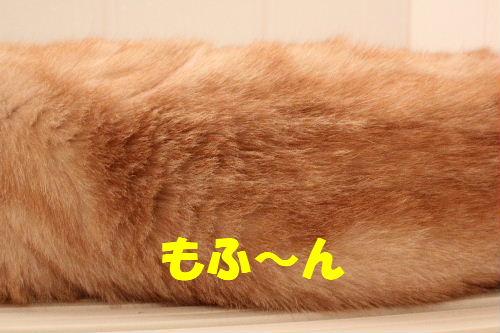 2011年7月風呂5.JPG