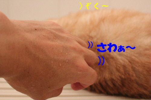 2011年7月風呂6.JPG