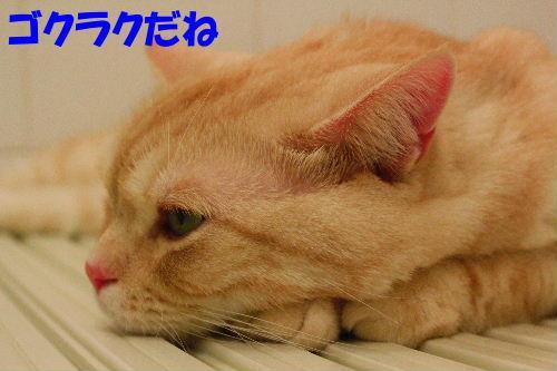 2011年8月お風呂4.JPG