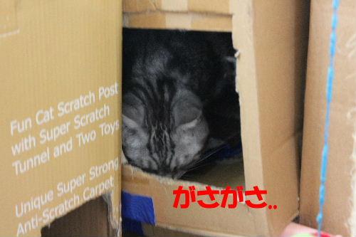 2011年8月つめ1.JPG