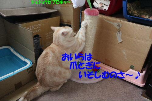 2011年8月つめ4.JPG