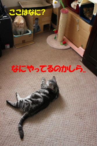 2011年8月つめ8.JPG