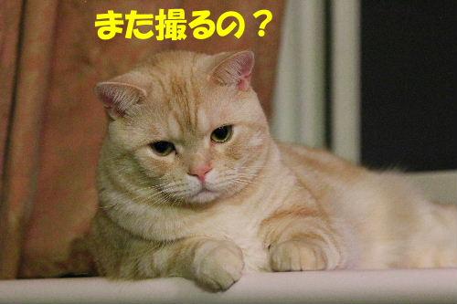 2011年8月ひげ0.JPG