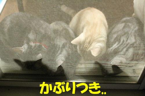 2011年8月カナ1.JPG