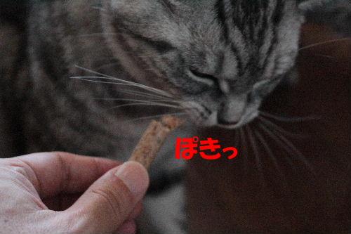 2011年8月カナ8.JPG