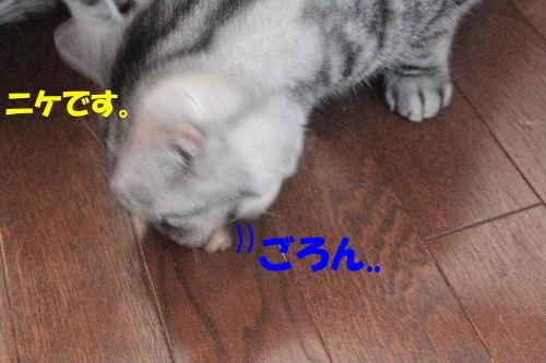 2011年8月カナ9.JPG