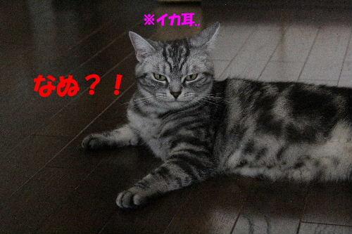 2011年8月ノエ5.JPG