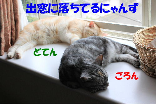 2011年8月出窓1.JPG