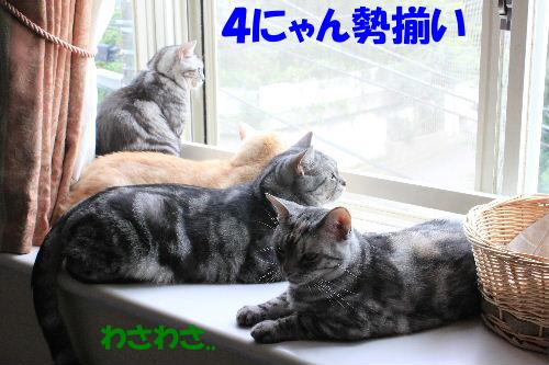 2011年8月出窓2.JPG