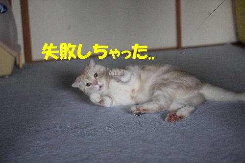 2011年8月涼4-3.JPG