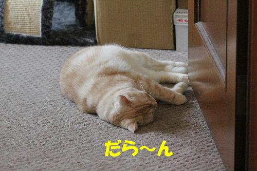 2011年9月ごろ2.JPG
