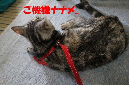 2011年9月はね2-2.JPG