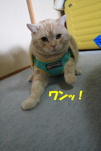 2011年9月はね3-2.JPG