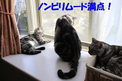 2011年9月よい6.JPG