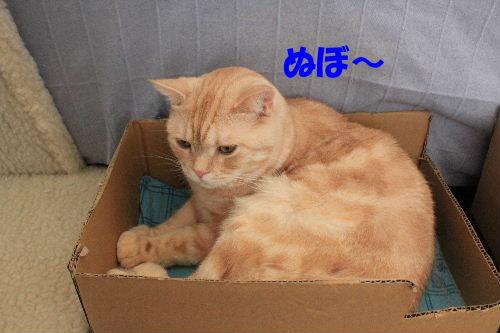 2011年9月よい7.JPG