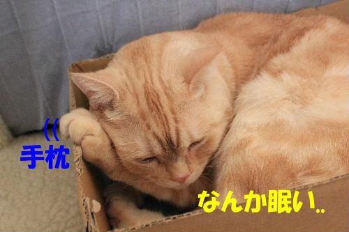 2011年9月よい8.JPG