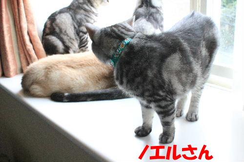 2011年9月アキ1.JPG