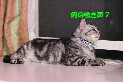 2011年9月アキ5.JPG