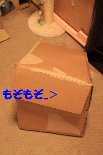 2011年9月プレ2.JPG