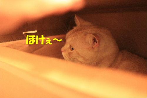 2011年9月プレ2-2.JPG