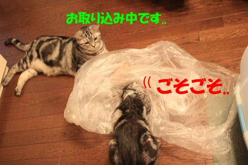 2011年9月プレ2-4.JPG
