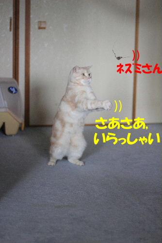 2011年9月最終3-2.JPG