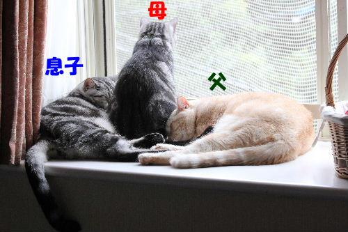 2011年9月窓辺0.JPG
