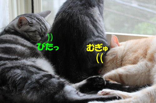 2011年9月窓辺1.JPG