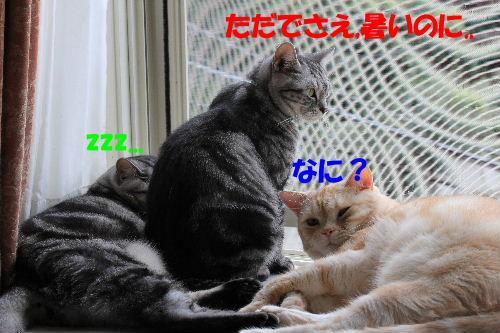 2011年9月窓辺4.JPG