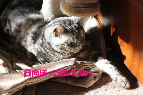 2012年1月光3-5.JPG