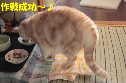 2012年1月太い4.JPG