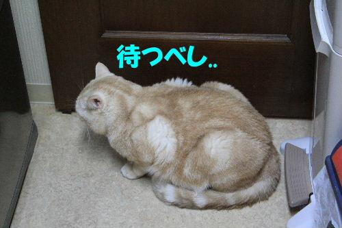 2012年1月太い5.JPG