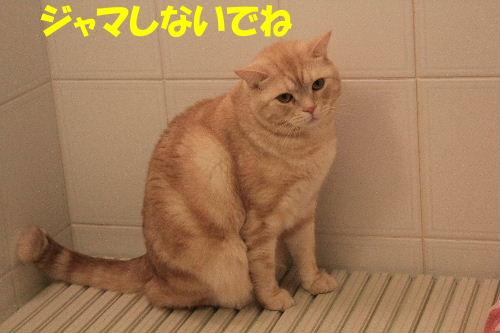2012年1月太い7.JPG
