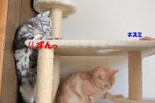 2012年1月子供2-5.JPG