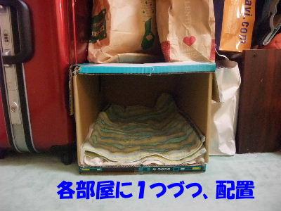 2012年1月黒猫2-2.JPG