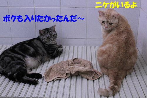 2012年2月うる2.JPG