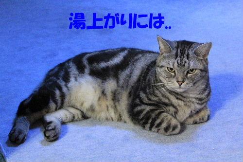 2012年2月うる5.JPG
