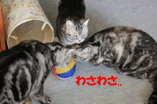 2012年2月シ4.JPG