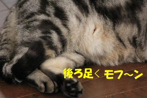 2012年2月シ6-2.JPG