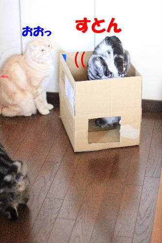 2012年2月箱箱2.JPG