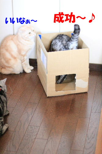2012年2月箱箱2-2.JPG