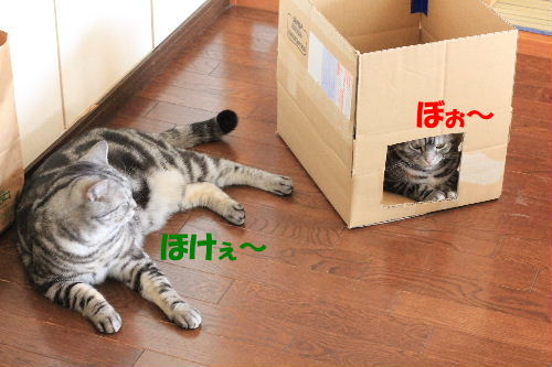 2012年2月箱箱2-4.JPG