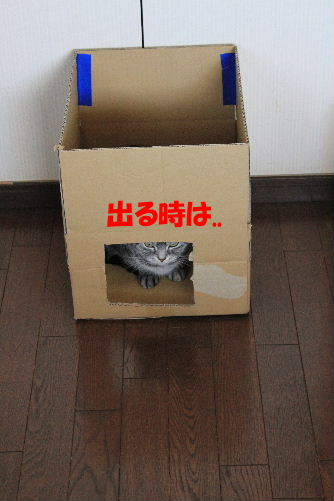 2012年2月箱箱3-2.JPG