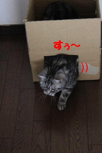 2012年2月箱箱3-3.JPG